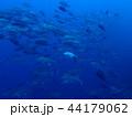 ギンガメアジの群れ2 44179062