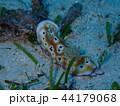 バリカサグのウミウシ 44179068