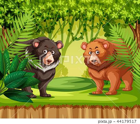 bears in the jungleのイラスト素材 44179517 pixta