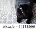 悲しげな黒猫 44188999