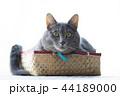 箱に入った猫 44189000