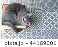 箱に入った猫 44189001