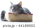 箱に入った猫 44189002