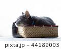 箱に入った猫 44189003