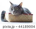 箱に入った猫 44189004