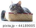 箱に入った猫 44189005