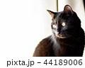 黒猫 44189006