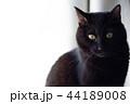 黒猫 44189008