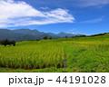 風景 棚田 晴れの写真 44191028