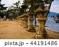 厳島神社 宮島 世界遺産の写真 44191486