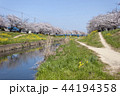 佐奈川 春 桜の写真 44194358