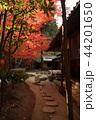 古都鎌倉の秋 晩秋の明月院② 44201650