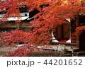 古都鎌倉の秋 晩秋の明月院④ 44201652