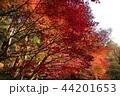 古都鎌倉の秋 晩秋の明月院⑤ 44201653