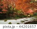 古都鎌倉の秋 晩秋の明月院⑨ 44201657