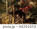古都鎌倉の秋 晩秋の明月院⑪ 44201659