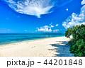 南のビーチ 44201848