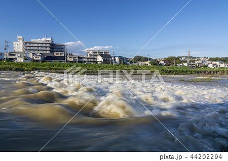 台風翌日の増水した魚道 44202294