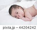写真 フォトグラフ アジア人の写真 44204242