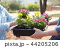 写真 お花 フラワーの写真 44205206
