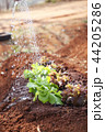 写真 フォトグラフ 農業の写真 44205286