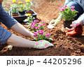 写真 農業 お花の写真 44205296