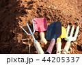 写真 フラワー 花の写真 44205337
