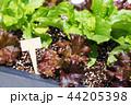 写真 フォトグラフ 農業の写真 44205398