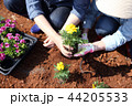 お花 フラワー 咲く花の写真 44205533