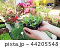 写真 お花 フラワーの写真 44205548