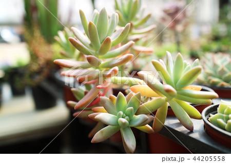 Ecology concept photo, gardening in a vegetable garden in spring 016 44205558
