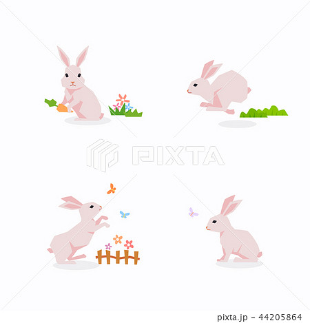 Animal icons collection vector illustration 055 44205864