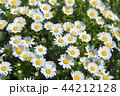 花壇は花盛り 44212128