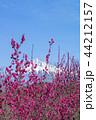 紅梅と富士山 44212157