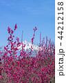 富士山 花 梅の写真 44212158
