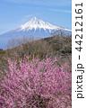 富士山 花 桜の写真 44212161