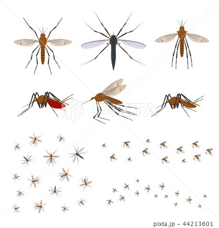 Cartoon Color Different Mosquito Icon Set. Vector 44213601