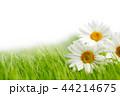 お花 フラワー 咲く花の写真 44214675