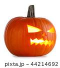 かぼちゃ カボチャ 南瓜の写真 44214692