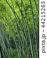 竹林 44215263