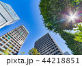新緑 夏 ビル群の写真 44218851