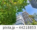 新緑 夏 ビル群の写真 44218853