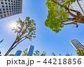 新緑 夏 ビル群の写真 44218856