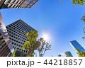 新緑 夏 ビル群の写真 44218857