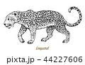 ヒョウ 豹 ネコのイラスト 44227606
