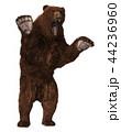 グリズリー くま クマのイラスト 44236960