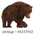 グリズリー くま クマのイラスト 44237032