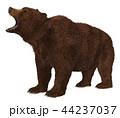 グリズリー くま クマのイラスト 44237037