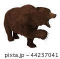 グリズリー くま クマのイラスト 44237041