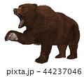 グリズリー くま クマのイラスト 44237046